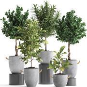 珍稀植物树种437 3d model