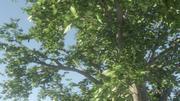 动画树 3d model