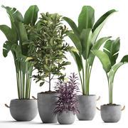 438珍稀植物 3d model
