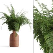 Pişmiş toprak vazo içinde eğreltiotu 3d model