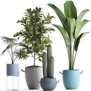 收集外来植物439 3d model