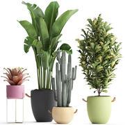 收集外来植物440 3d model