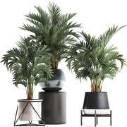 422盆中的装饰性棕榈树的集合 3d model
