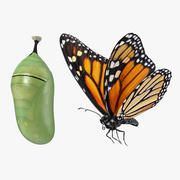 Monarch Butterfly with Cocoon Collection 3d model