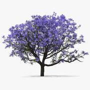 Цветущее дерево жакаранды 3d model