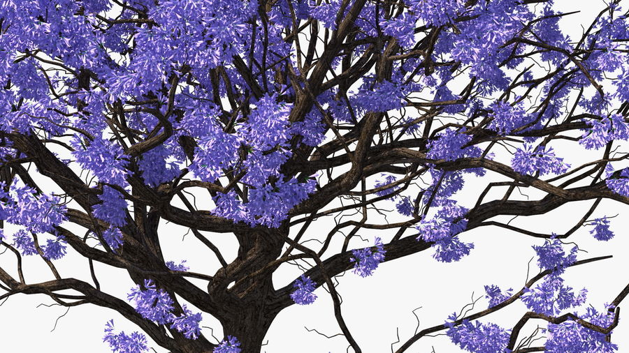 Blühender Jacaranda-Baum ohne Blätter royalty-free 3d model - Preview no. 13