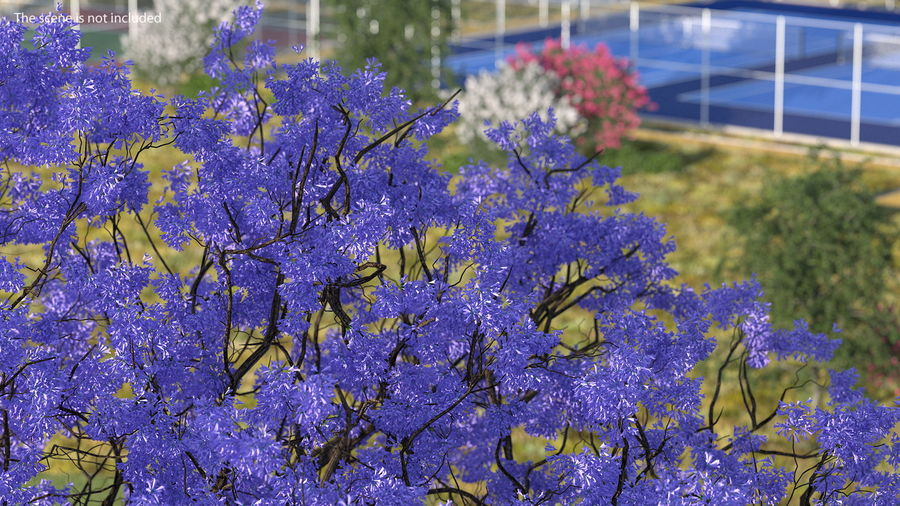 Blühender Jacaranda-Baum ohne Blätter royalty-free 3d model - Preview no. 5