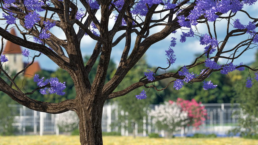 Blühender Jacaranda-Baum ohne Blätter royalty-free 3d model - Preview no. 4