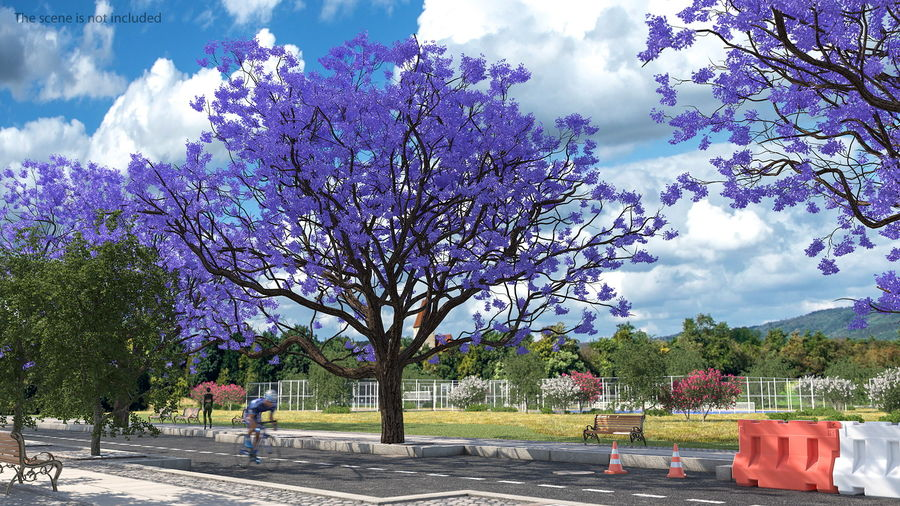 Blühender Jacaranda-Baum ohne Blätter royalty-free 3d model - Preview no. 3