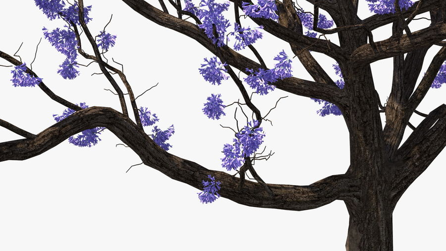 Blühender Jacaranda-Baum ohne Blätter royalty-free 3d model - Preview no. 14