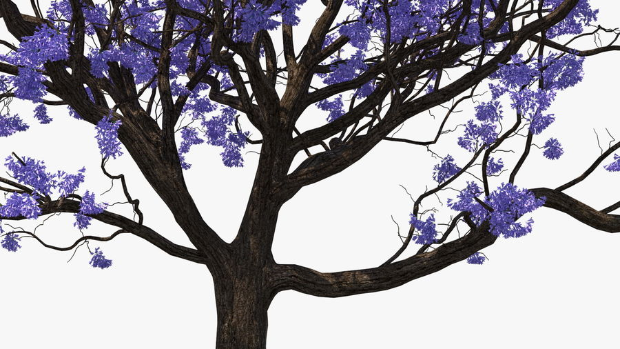 Blühender Jacaranda-Baum ohne Blätter royalty-free 3d model - Preview no. 11