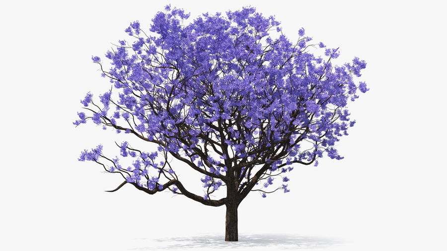 Blühender Jacaranda-Baum ohne Blätter royalty-free 3d model - Preview no. 2