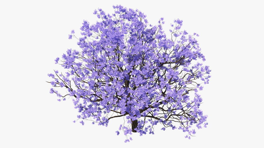 Blühender Jacaranda-Baum ohne Blätter royalty-free 3d model - Preview no. 8