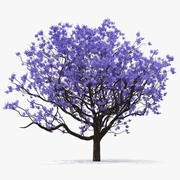 Blooming Jacaranda Tree without Leaves 3d model
