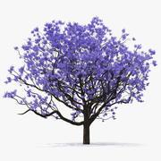 Fioritura di albero di Jacaranda senza foglie 3d model