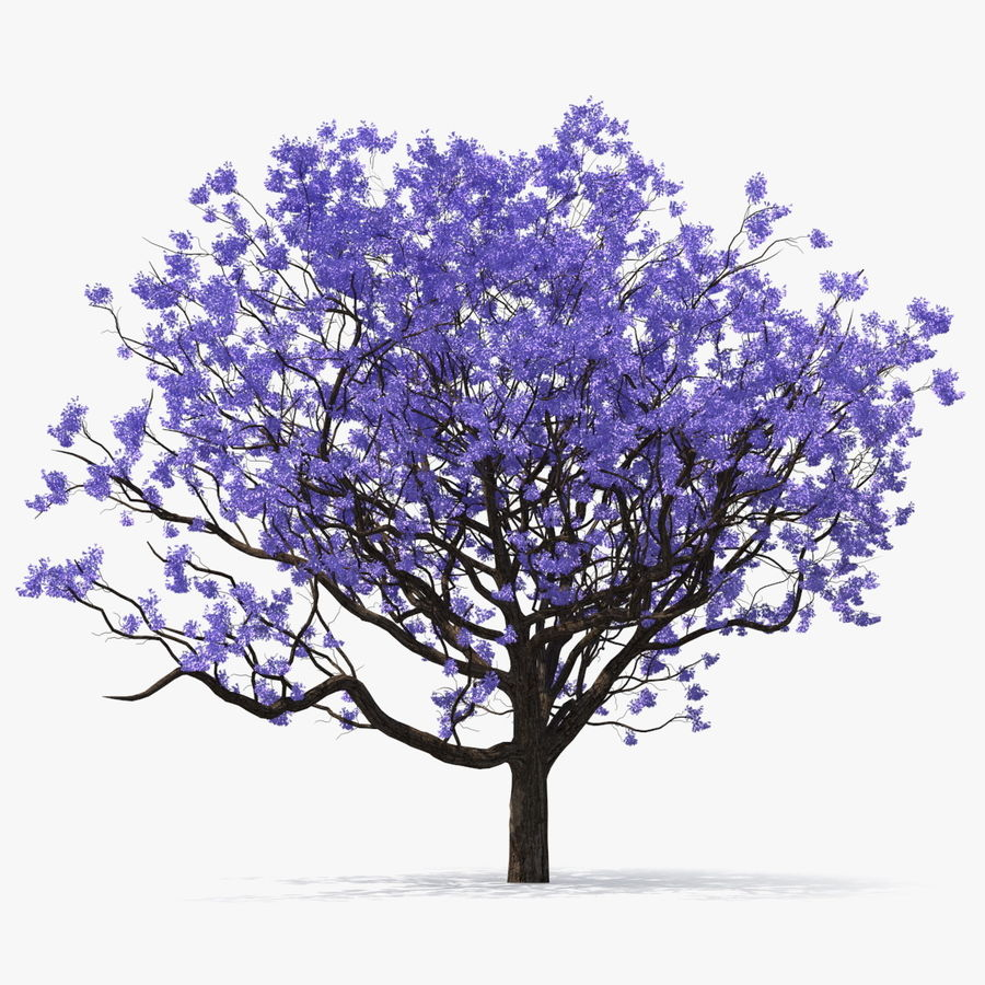 Blühender Jacaranda-Baum ohne Blätter royalty-free 3d model - Preview no. 1