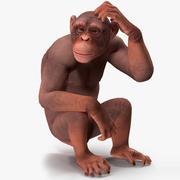 Легкий шимпанзе, приспособленный для Майи 3d model