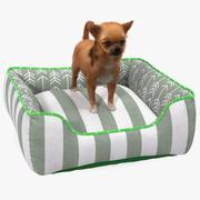Chihuahua w legowisku dla psa z futrem 3d model