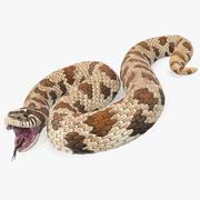 Brown Hognose Snake Rigged for Maya 3d model