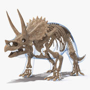 Triceratops Fossil Standing Pose with Transparent Skin 3d model