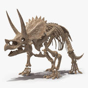 Triceratops Skeleton Fossil 3d model