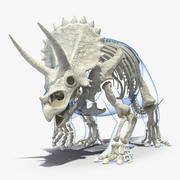 Triceratops Skeleton Walking Pose with Transparent Skin 3d model