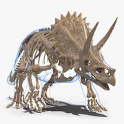 Triceratops Fossil Walking Pose with Transparent Skin 3d model