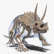 Triceratops Skeleton Fossil with Transparent Skin 3d model