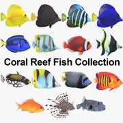 Coral Reef Fish Collection 3d model