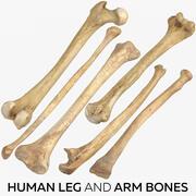 Human Leg and Arm Bones 3d model