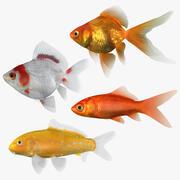 金魚コレクション2 3d model