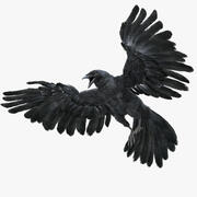 Crow Fur Animation opgetuigd 3d model