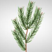 Pine Tree Branch 3d model