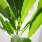 Plante verte en pot 3d model