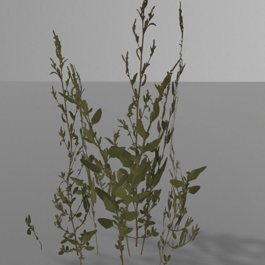 Forest plants royalty-free 3d model - Preview no. 4