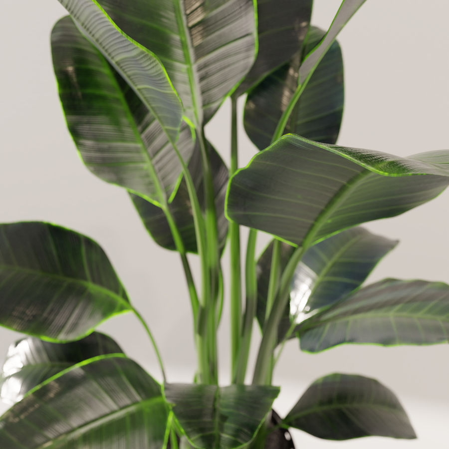 Potted Plant royalty-free 3d model - Preview no. 3