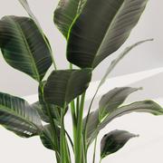 Saksı bitkisi 3d model