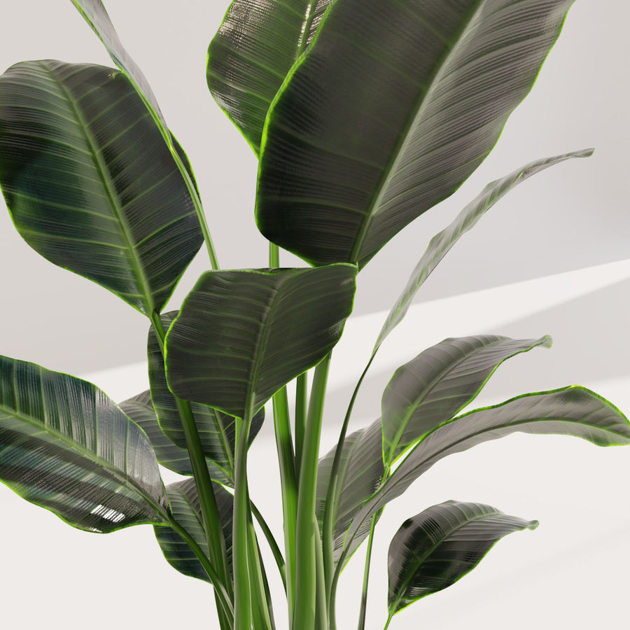 Potted Plant royalty-free 3d model - Preview no. 5
