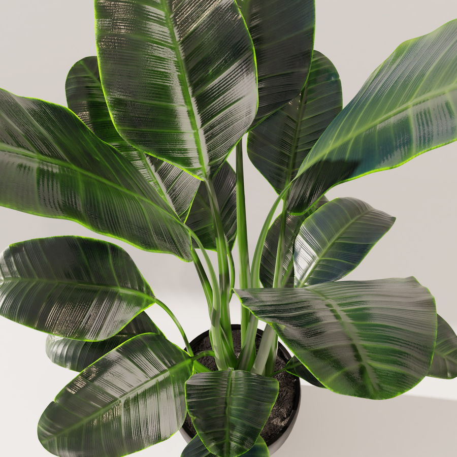 Potted Plant royalty-free 3d model - Preview no. 4