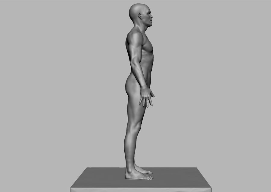 Mannelijke anatomie figuur royalty-free 3d model - Preview no. 3