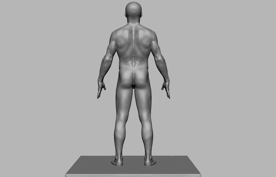 Mannelijke anatomie figuur royalty-free 3d model - Preview no. 5