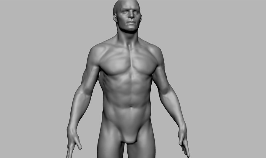 Mannelijke anatomie figuur royalty-free 3d model - Preview no. 6