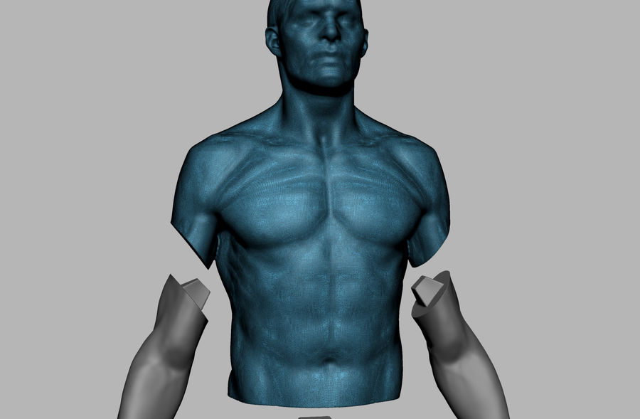 Mannelijke anatomie figuur royalty-free 3d model - Preview no. 15