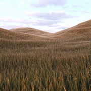 Grass Low Poly 5 3d model
