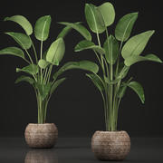 Exotic plants banana tree set 456 3d model