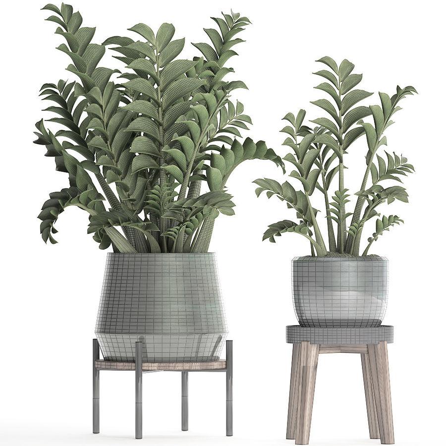 Kolekcja Egzotyczne rośliny w doniczce 449 Zamioculcas royalty-free 3d model - Preview no. 8