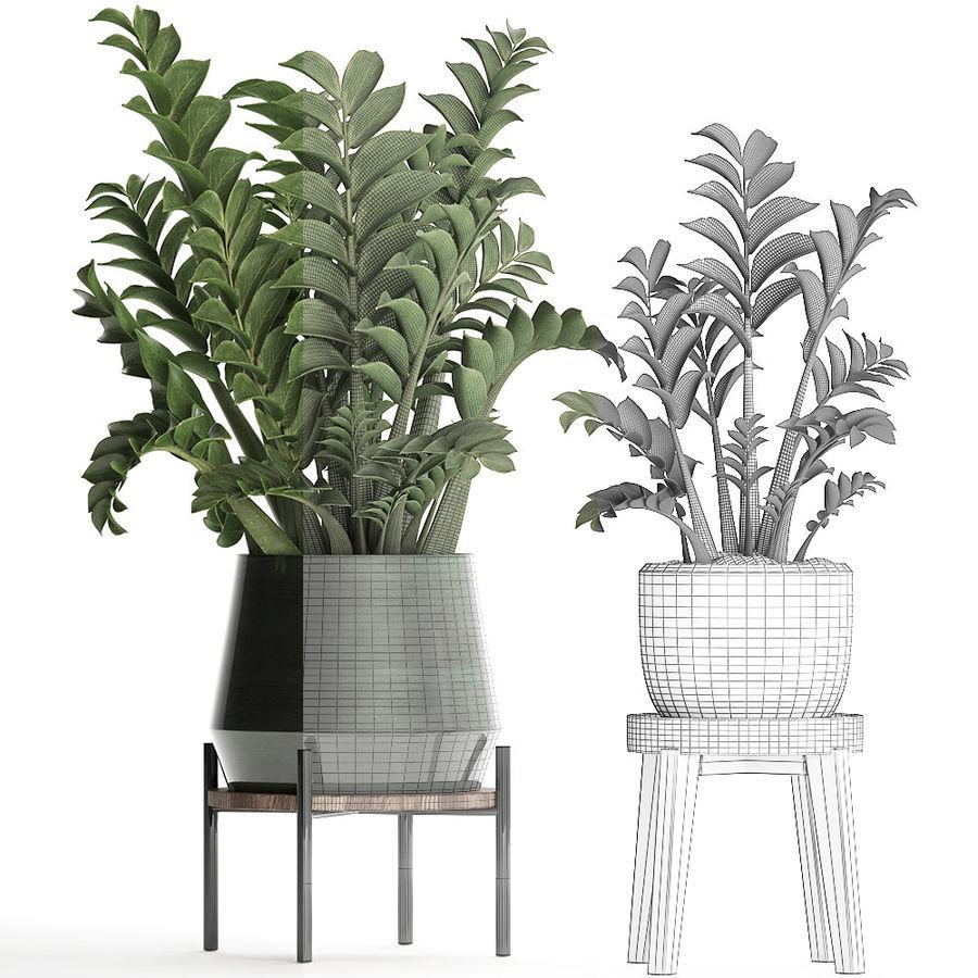 Kolekcja Egzotyczne rośliny w doniczce 449 Zamioculcas royalty-free 3d model - Preview no. 7