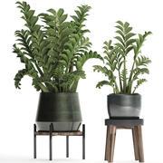 Kolekcja Egzotyczne rośliny w doniczce 449 Zamioculcas 3d model
