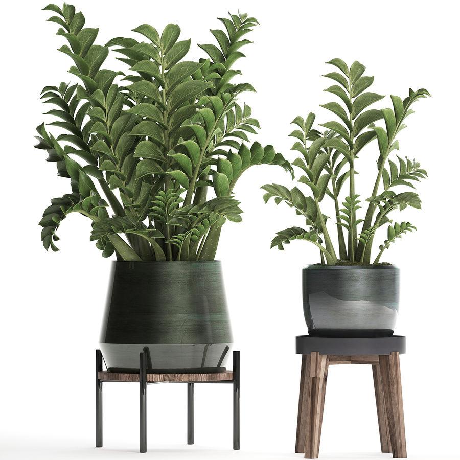 Kolekcja Egzotyczne rośliny w doniczce 449 Zamioculcas royalty-free 3d model - Preview no. 1