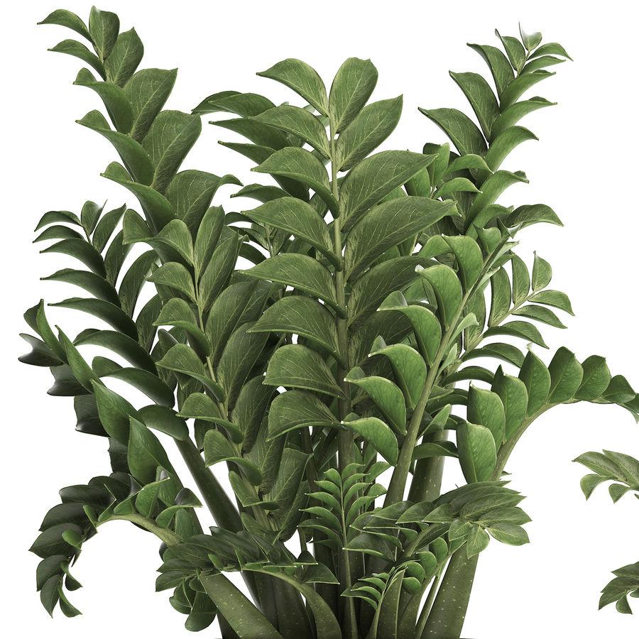 Kolekcja Egzotyczne rośliny w doniczce 449 Zamioculcas royalty-free 3d model - Preview no. 2